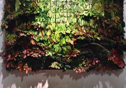 Sharon Kopriva_Forest Window